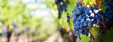 Dégustation les vins du Roussillon(2)
